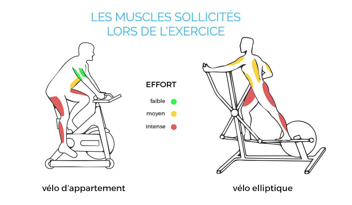 quel muscle fait travailler le vélo
