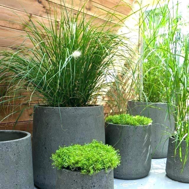 pot plante exterieur